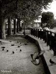 Les Pigeons du Canal