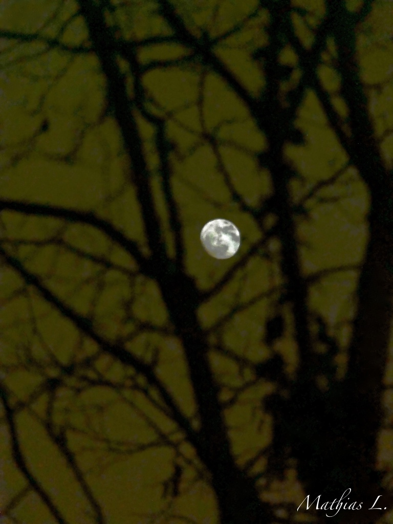 Beyond the trees, she looks at us ...