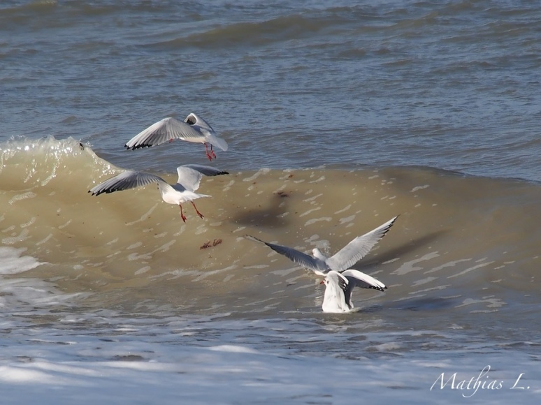 Vol à vagues