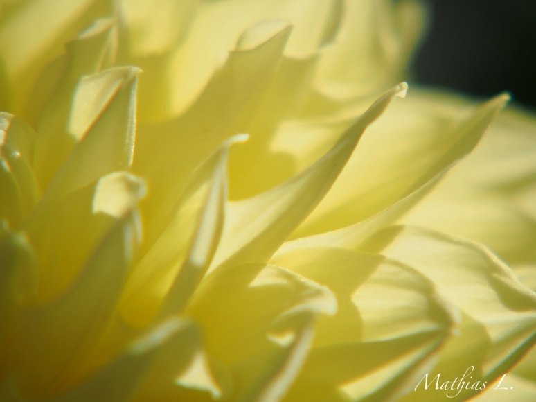 Abstraction Florale