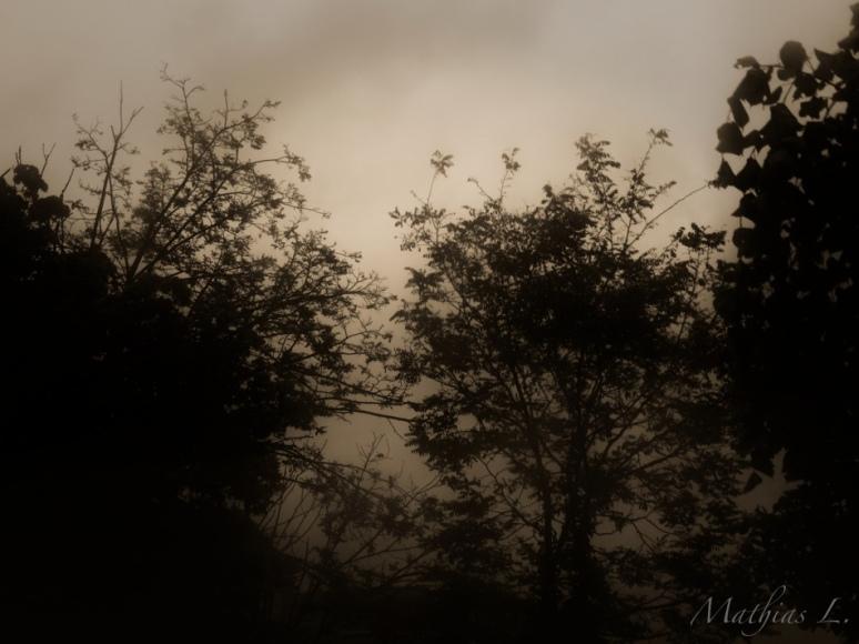 Brume en soirée