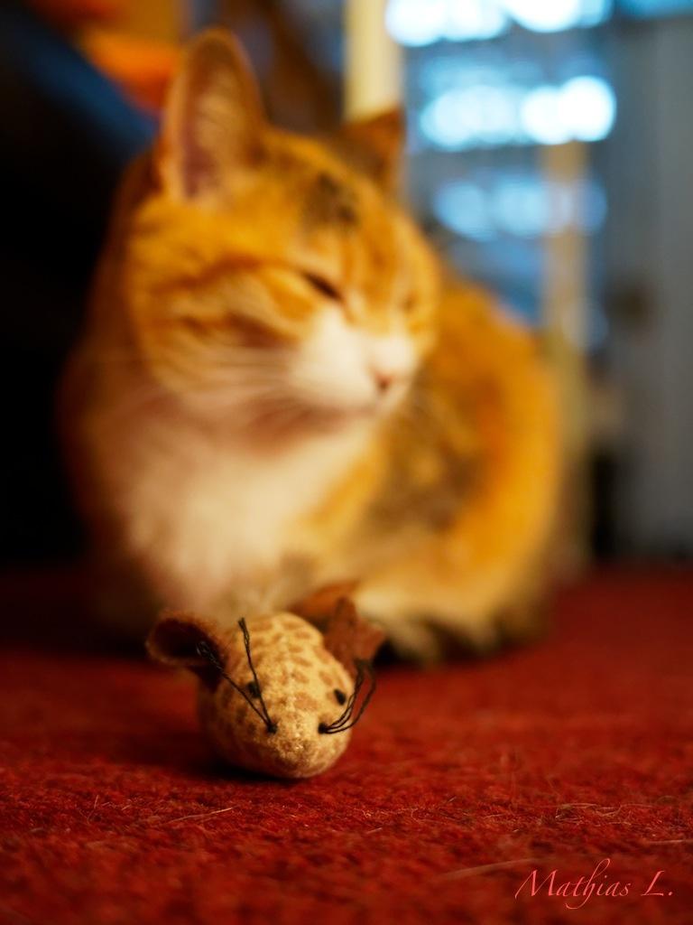 La souris de pelote