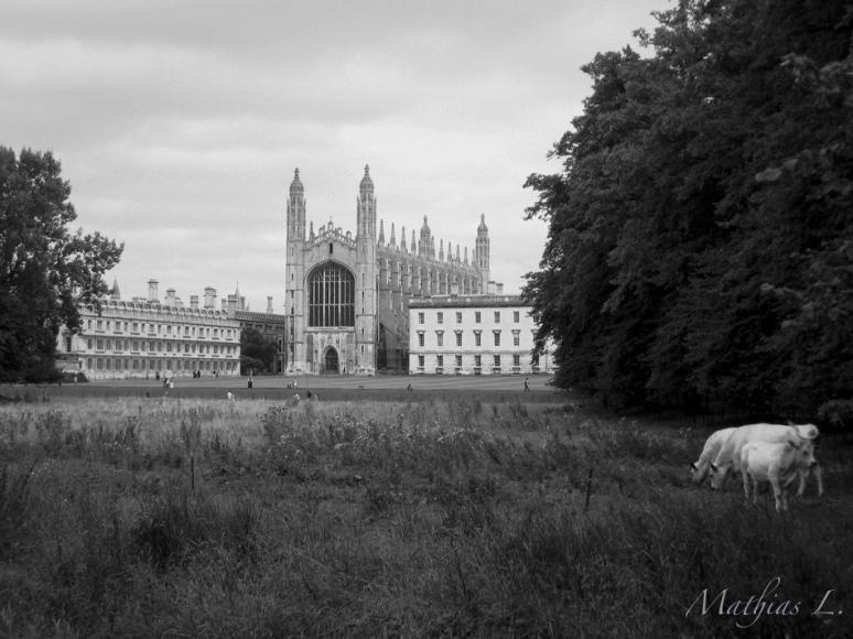 Bucolique Cambridge