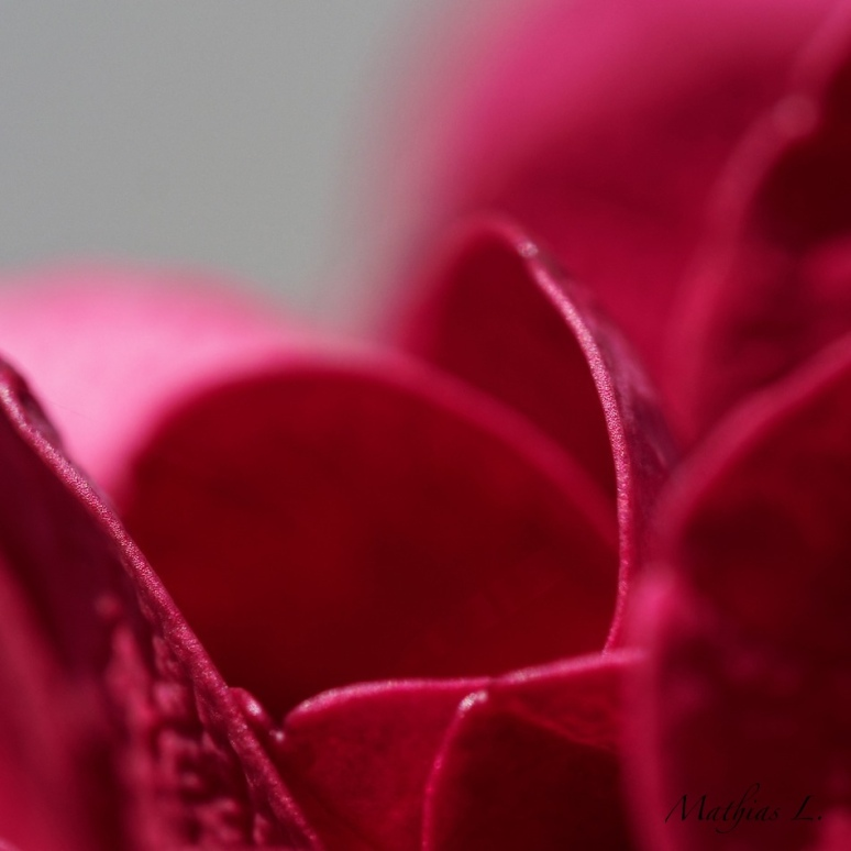 Abstractions florales