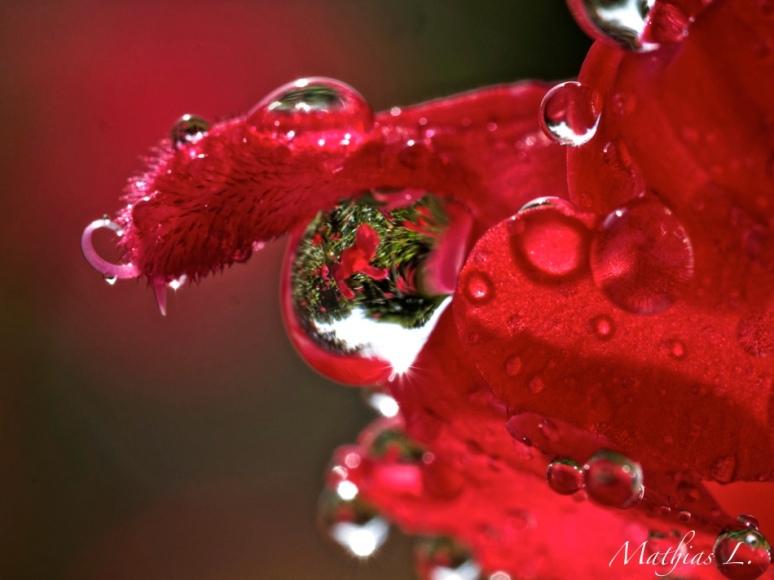 Fleurs en pleur