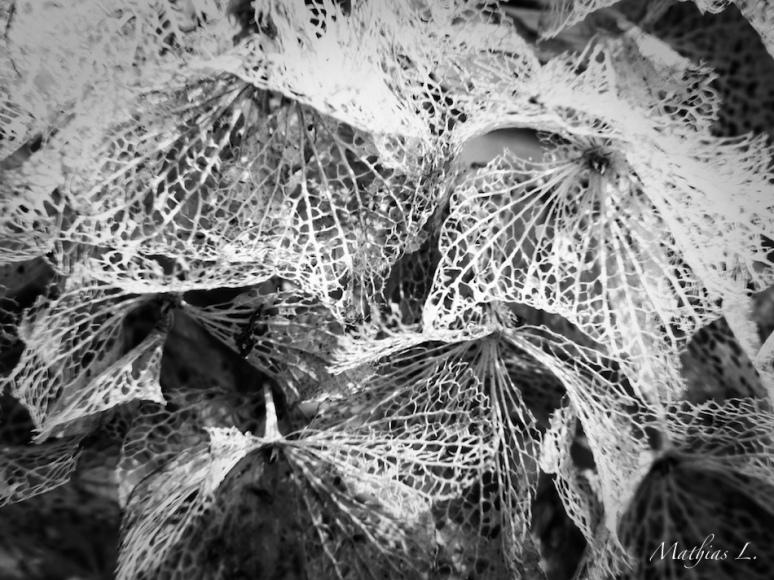 Dentelle florale