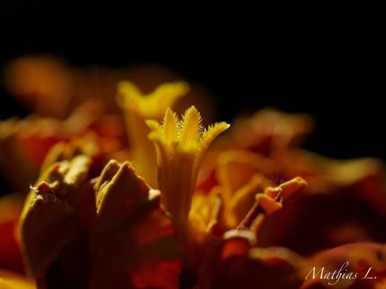 Macro fleurs