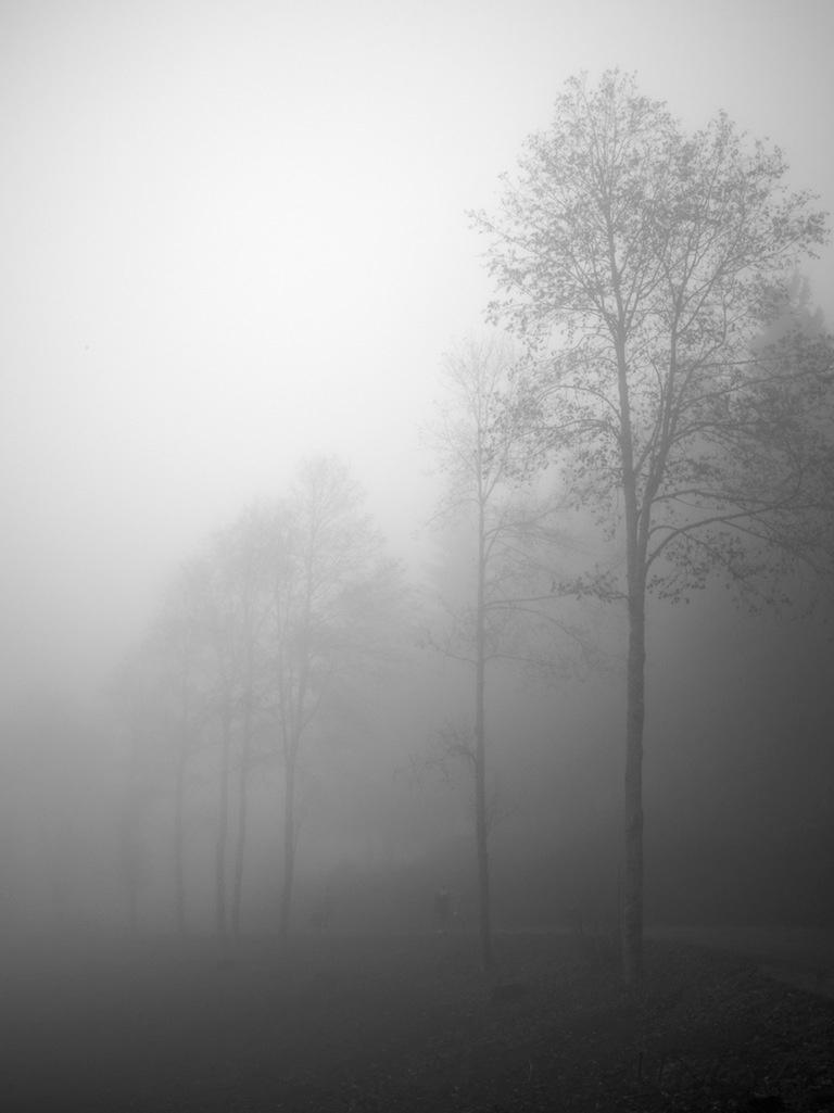 Brume - Forêt