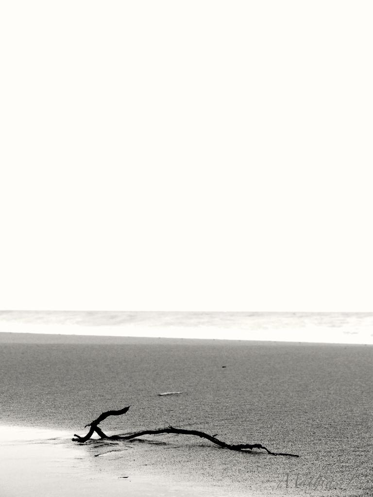 Branche sur la plage 2