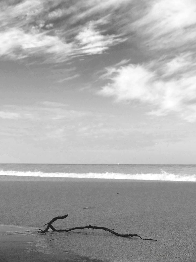 Branche sur la plage 1