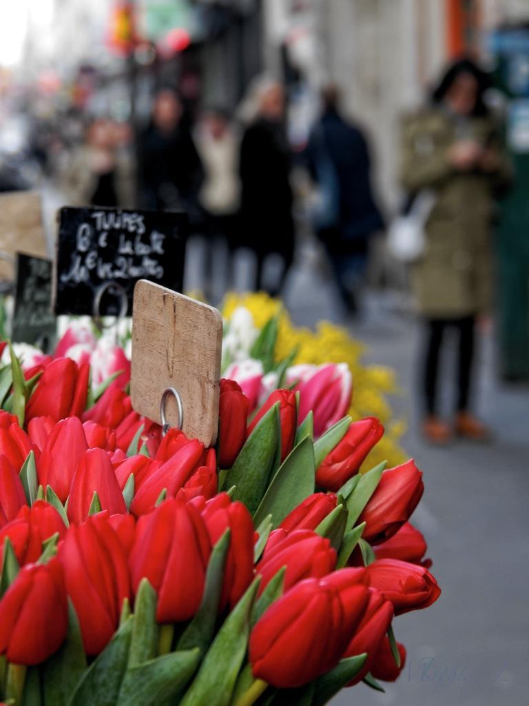 Fleurs des rues