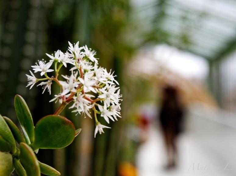 Les grandes serres du jardin des plantes
