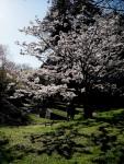 Fleurs - Jardin Albert-Kahn