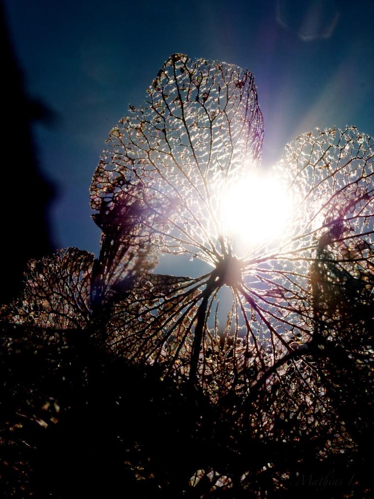 Soleil et dentelle