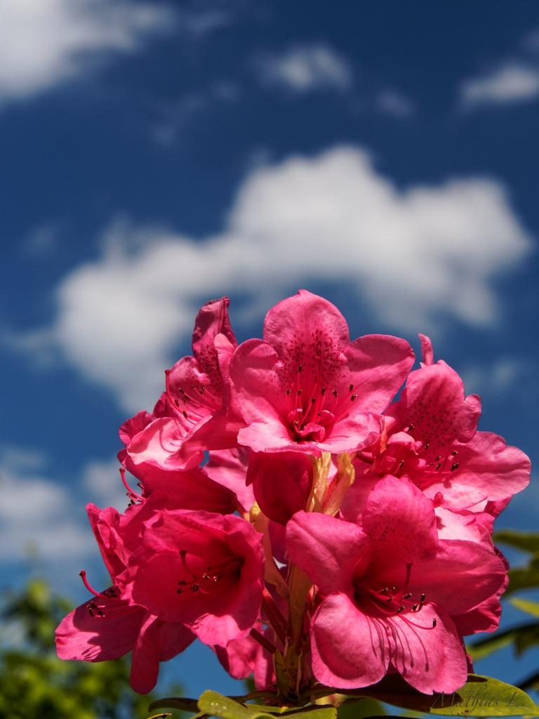 humeur florale