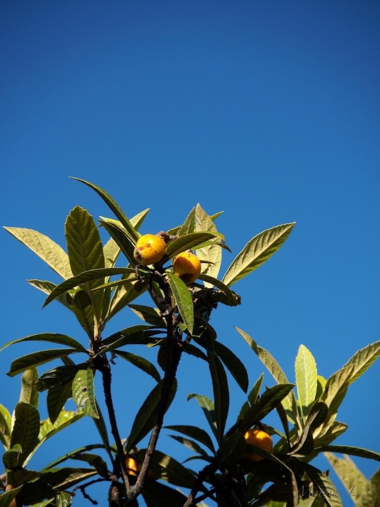 Un jardin en Corse
