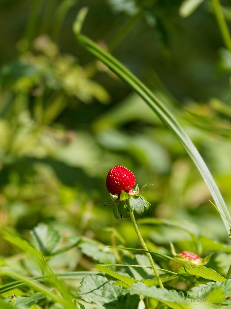L'été arrive au jardin Albert Kahn