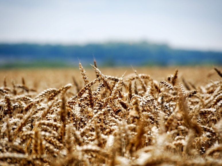 Du grain à moudre