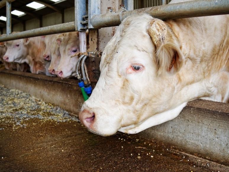 Ambonville : La ferme