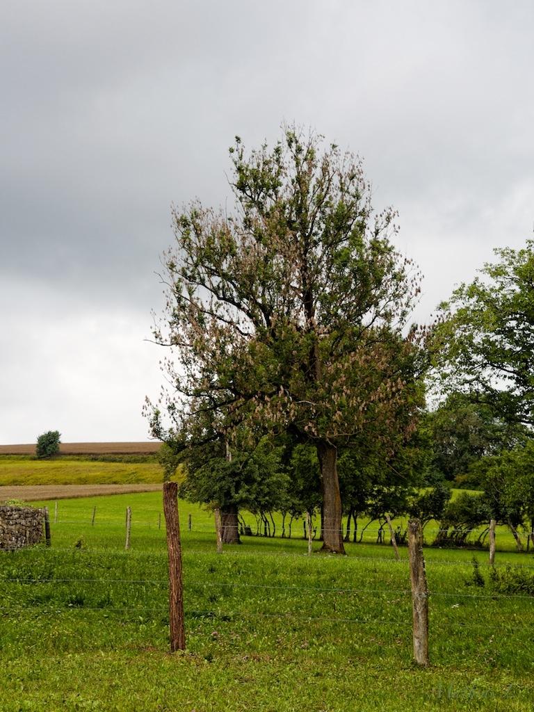 Les champs d'Ambonville