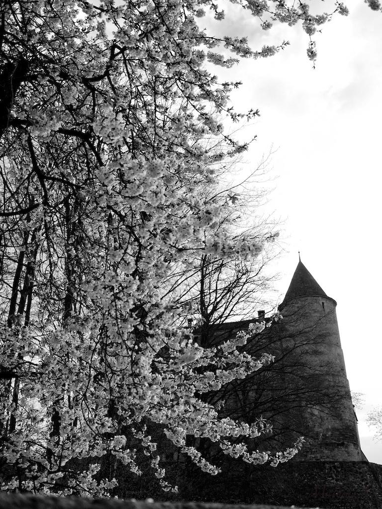 Granson - Suisse