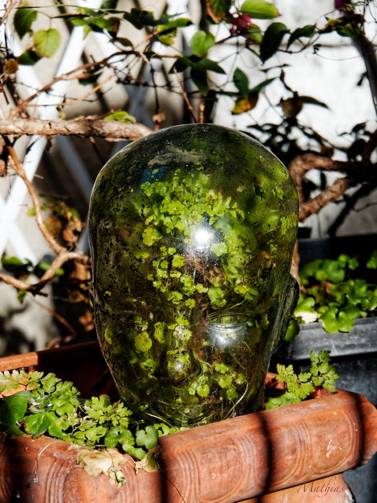 Avoir des idées vertes