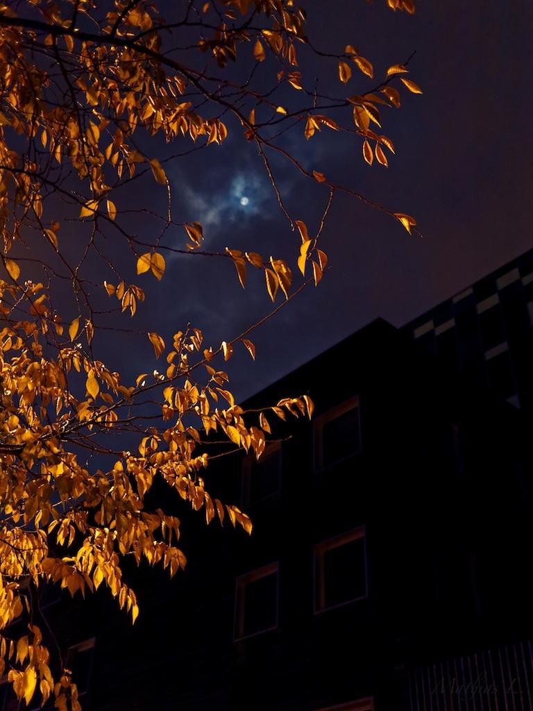 Lille la nuit - Couleurs