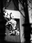 La Cité des Fleurs