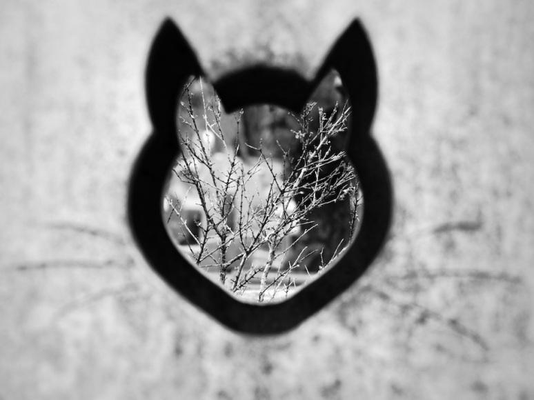 Dans la tête d'un chat