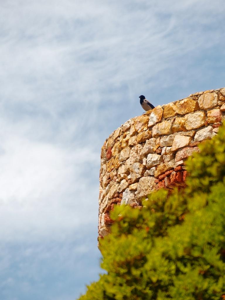Isolella - Corse