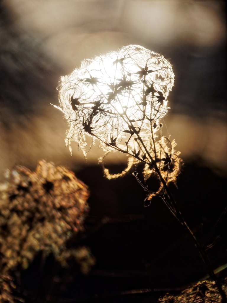 Ampoule végétale